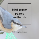 Bird Totem: Pygmy Nuthatch