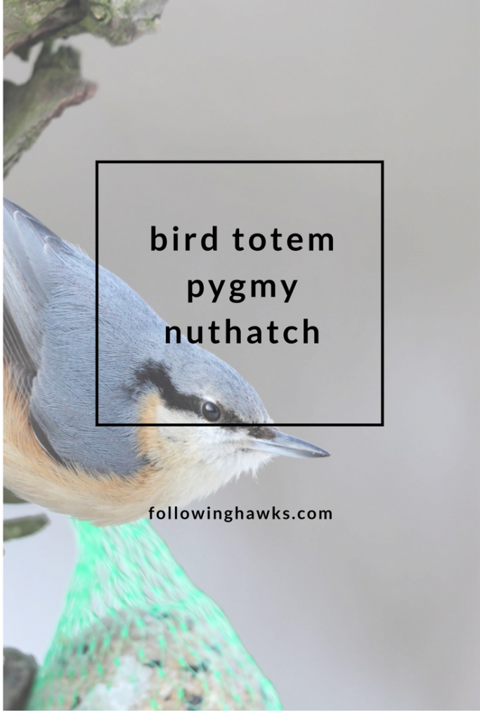 What do nuthatches symbolize?