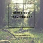 Whispering Pine Trees