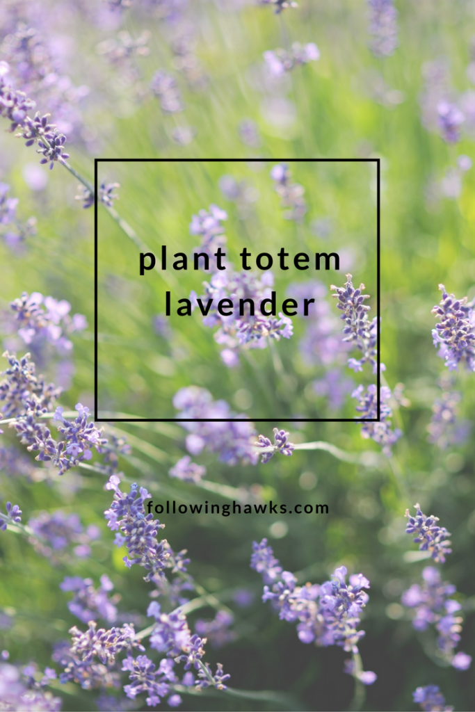 Connecting and talking with a lavender plant.