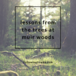 Lessons From the Trees at Muir Woods