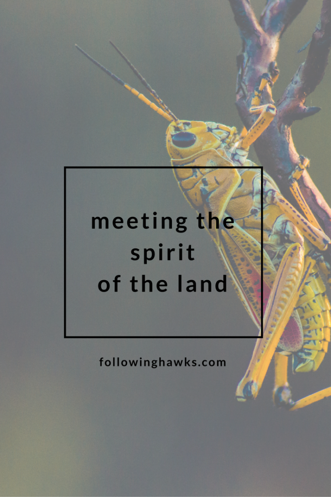 Shamanism | Animal Totem | Meet the Spirit of the Land
